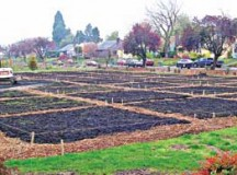 New Community Garden Plots