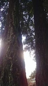 acover-tree